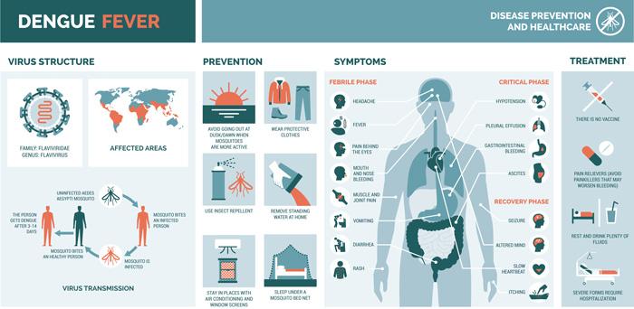 Caribbean warned to brace for dengue outbreak