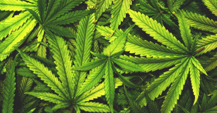 New York Marijuana: Statewide Decriminalization Takes Effect Today